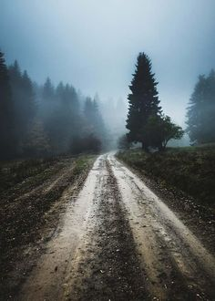 Foggy road Plakat