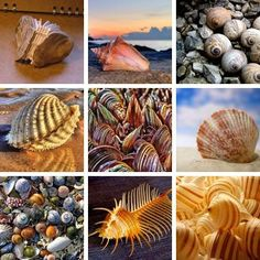 1.Shell Book , 2.Conch Shell , 3.garden of shells , 4.Shell HDR , 5.Mussel shells , 6.Shell game , 7.Shell pick 'n' mix , 8.Amazing Venus Comb Shell , 9.She Sells Sea Shells