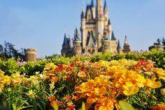 I like Disney, magic, and happiness. Disney Time, Disney World Vacation, Disney World Resorts, Disney Magic, Disney Parks, Walt Disney World, Tokyo Disney Resort, Tokyo Disneyland, Magic Kingdom Castle