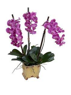 56% OFF New Growth Designs Faux Phalaenopsis Orchid (Fuchsia)