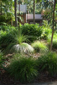 Stunning use of Australian natives | Mallee Design – Grass-trees & Butterfly Chairs