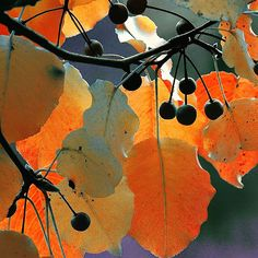 colors manipulated beautifully