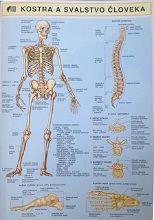 Kostra a svalstvo človeka Reiki, Map, Location Map, Maps