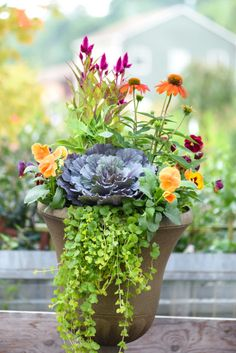 This gorgeous fall container includes ornamental cabbage, pansies, kale, coneflower, celosia and creeping Jenny. Fall Flower Pots, Fall Flowers, Ornamental Cabbage, Ornamental Plants, Fall Containers, Succulent Containers, Fall Planters, Fall Potted Plants, Autumn Planter Ideas