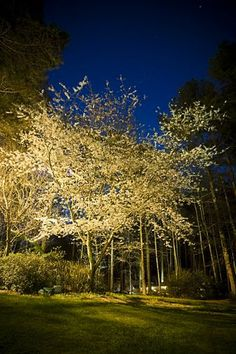 Custom Outdoor Lighting for a Spectacular National Award Winning Outdo… :: Hometalk ~ all my trees would glow in my garden!