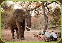 TERRITORI AFRICA - Viaggi in AFRICA, viaggi Sudafrica, tour Namibia, fly drive Botswana, viaggi Zimbabwe, mare Mozambico, tour Zambia, viagg...  DATO DA elysa78@libero.it viaggio Sudafrica con Avventure