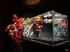 フラワーアクアリウム FLOWER AQUARIUM Natural Selection, Fish Tanks, Flower Art, Underwater, Interior Decorating, Architecture, Space, Flowers, Nature