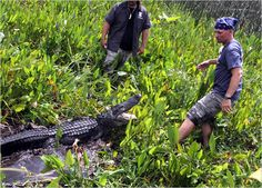 Gator Boys : Photo Gallery Animal Planet: Photos: Animal Planet