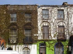 Along Hackney Road past the overgrown terraced houses.