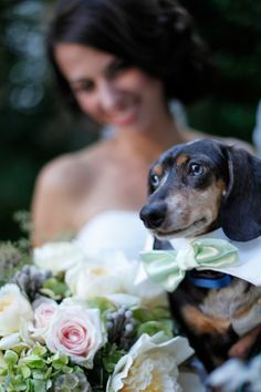 Bride taking a photo with her dachshund (wearing a bow tie)