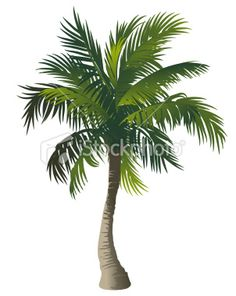 Illustration about Vector illustration of a palm tree. Illustration of beach, white, stylized - 15312209 Palm Tree Clip Art, Palm Tree Drawing, Palm Tree Vector, Horse Wall Decals, Kids Wall Decals, Illustrations, Illustration Art, Tropical Wall Decals, Beach Sunset Painting