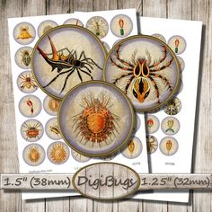 Shop for on Etsy, the place to express your creativity through the buying and selling of handmade and vintage goods. Sea Spider, Crabs, Collage Sheet, Digital Collage, Spiders, Sea Creatures, Under The Sea, Circles, Printables