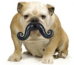 Mustacheke!