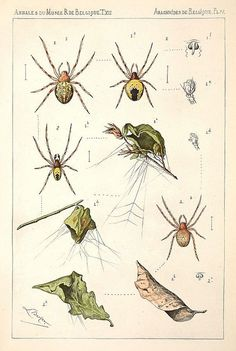 Spiders - without names.