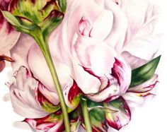 Greetings card, Card for Her, Botanical Art, Peony and Bud, Peony Watercolor