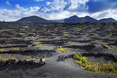 Lanzarote boasts extremely unusual vistas. Thanks to its volcanic history, most of the island has treeless, moonlike landscapes with different colored soils, craters, bizarre rock formations and gently sloping mountains.  #vineyards #volcanoes #farming #agriculture #travel #wine