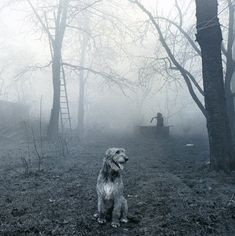 Irish Wolfhound Story: Learn From The Children and The Dogs. Forest Elf, Black And White Dog, Gentle Giant, Irish Wolfhounds, Big Dogs, Doge, Dog Life, Dog Lovers, Creatures