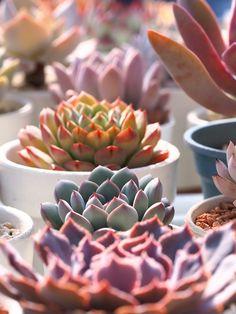 markunsan:  succulents  http://ift.tt/2jVScOS