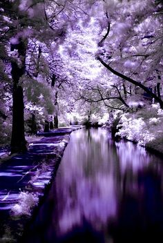 A purple paradise, these colors look awesome! Brought to you by shoplet.com, everything for your business!