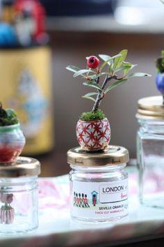 「ピラカンサスの超ミニ盆栽」の画像|超ミニ盆栽のブログ |Ameba (アメーバ)