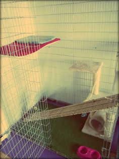 Cat Hotel in Budapest, kennel number 1