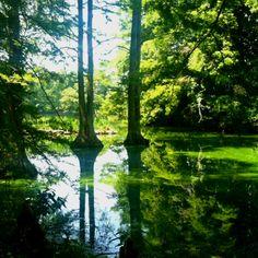 Swan Lake, Sumter SC