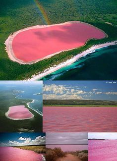 This is a stunning look at Lake Hillier in Australia. Although the source of the pink colour has not been definitively proven in the case of Lake Hillier, the pink colour of other salt lakes in the region arises from a dye created by the organisms Dunaliella salina and Halobacteria.