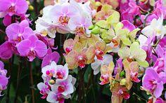 Магия Худу (Hoodoo): ~ * ~ Травы в HOODOO: Орхидея ~ * ~