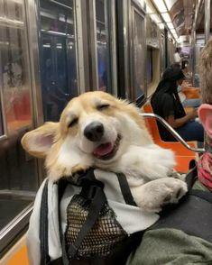 Super Cute Animals, Cute Little Animals, Cute Funny Animals, Silly Dogs, Funny Dogs, Funny Animal Videos, Animal Memes, Cute Puppies, Cute Dogs