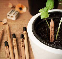 Sprout pencil: lápis com sementes é uma maneira fácil de plantar temperos e ervas em casa.