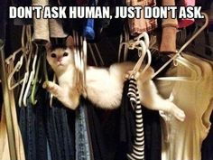 25 Hilarious Photos Of Cats Stuck In Things