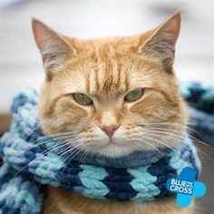 """""""A Street Cat Named Bob""""    Bob is not smiling.  I think the poor dear needs to be given his peace and rest, full-time now. <3  Well, both he and James know differently now, and deserve it!  :)"""