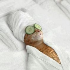 A restful day at the cat spa