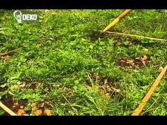 A mulcs csodái - gazigazito. Artist Album, Global Warming, Garden Tools, World, Youtube, Deco, Yard Tools, The World, Youtubers