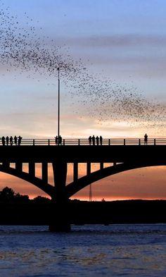 Congress Avenue Bridge aka the bat bridge | Austin, TX