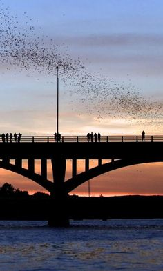 """Austin, Texas - The famous Congress Avenue Bridge bats! """"Every summer night, hundreds of people gather to see the world's largest urban bat colony emerge from under the Congress Avenue Bridge. These 1.5 million bats are fun to watch, but they're also making our world a better place to live."""" - Bat Conservation International"""
