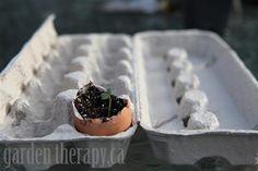 Egg Shell and Egg Carton Seed Starters