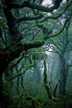 Subtropical rainforest in Waikaremoana, New Zealand. Photograph by Bryan Larson. All Nature, Amazing Nature, Green Nature, Landscape Photography, Nature Photography, Photography Aesthetic, New Zealand Landscape, Fotografia Macro, Tree Forest