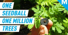 Charcoal-coated seedballs are re-planting Kenya's lost forests Natalie Portman Oscar, Dog Emotions, Oscar Speech, Female Directors, Cherokee Nation, Facial Recognition, Forests, Kenya, Planting
