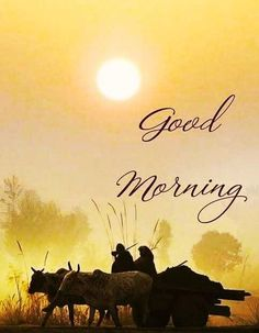 Good Morning Images, Movie Posters, Gud Morning Images, Film Poster, Good Morning Picture, Billboard, Film Posters