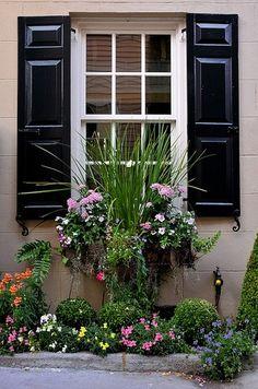 charleston green shutters, window box by willa