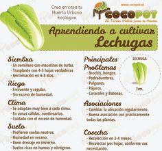 Uno de los #PlaceresOrgánicos es aprender a cultivar lechugas y comer saludable