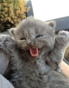 happy kitty, little ball of fur