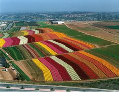 Beautiful Places & Spaces ~ The Flower Farm, Carlsbad, California