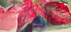 Poinsettia (watercolour sketch)