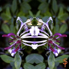 "Tauch ein in die Anderswelt ""Geißblatt Geist""  kreativesbypetra Petra, Plants, Diving, Plant, Planets"
