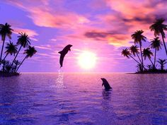 "Sunrise Screensavers with Dolphin | fai click con il pulsante destro e poi ""Salva immagine connome"""