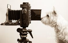 The Photo Dog Grapher - buy a print today!