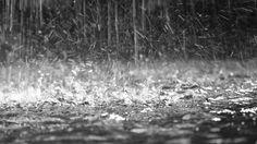 Mauro Ricci: La nuova pioggia.