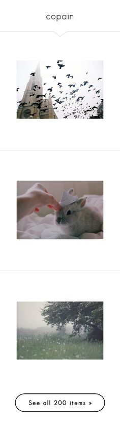 """""""copain"""" by blue-sushi ❤ liked on Polyvore featuring pictures, backgrounds, animals, pics, photos, images, filler, white, christmas and fillers"""
